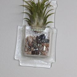 Wall Vase with Air Plant