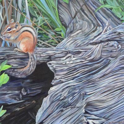 Timber Tiger
